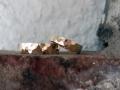 Förlovningsring-9-Guldringar-blankhamrade